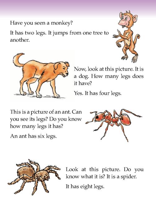 literature-grade 1-non-fiction-how many legs (2)