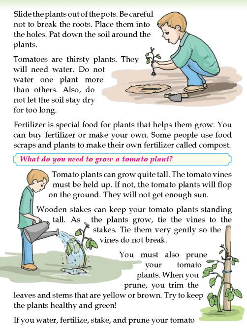 literature-grade 3-Non-fiction-Grow a tomato (2)